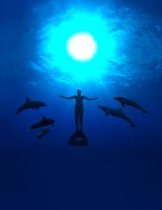 Documentário vencedor do Oscar alerta contra matança de golfinhos